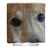 Close Up Of A Pet Dogs Eyes Shower Curtain