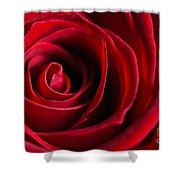 Close Up Of A Red Rose Shower Curtain