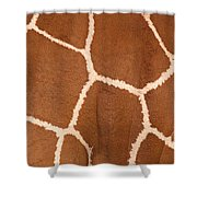 Close-up Of A Reticulated Giraffe Shower Curtain