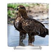 Close-up Of A Tawny Eagle Aquila Rapax Shower Curtain
