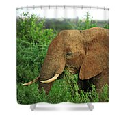Close Up Of African Elephant Shower Curtain