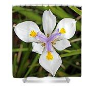 Close Up Of An Iris Shower Curtain
