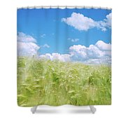 Close Up Of Barley Blowing In The Wind Shower Curtain