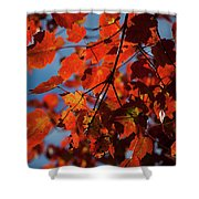 Close Up Of Bright Red Leaves With Blue Shower Curtain