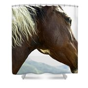 Close-up Of Brown Pinto Pony With White Shower Curtain