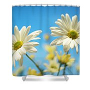 Close-up Of Daisies Against A Blue Shower Curtain