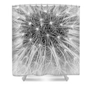 Close-up Of Dandelion Seeds Shower Curtain