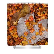 Close-up Of Fallen Maple Leaves Shower Curtain