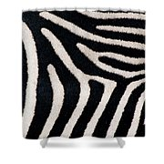 Close-up Of Greveys Zebra Stripes Shower Curtain