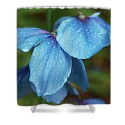 Close-up Of Himalayan Poppy Flowers Shower Curtain