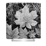 Close Up Of Leaves Shower Curtain