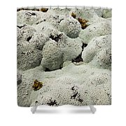 Close Up Of Lichens Commonly Called Rock Moss Shower Curtain