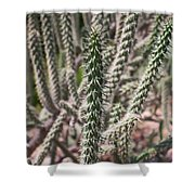 Close Up Of Long Cactus With Long Thorns  Shower Curtain