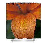 Close-up Of Orange Lily Flower After Shower Curtain