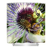 Close Up Of Passion Flower With Honey Bee  Shower Curtain