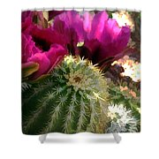 Close Up Of Pink Cactus Flowers Shower Curtain