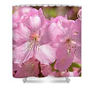 Close Up Of Pink Shell Azalea Flowers Shower Curtain