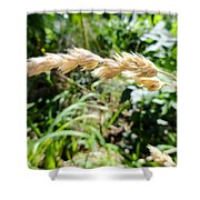 Close-up Of Prairie Grass Shower Curtain