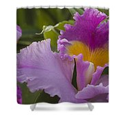 Close-up Of Purple Orchid Flowers Shower Curtain
