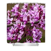 Close-up Of Redbud Tree Blossoms Shower Curtain