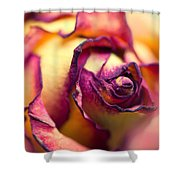 Close Up Of The Dry Rose Shower Curtain
