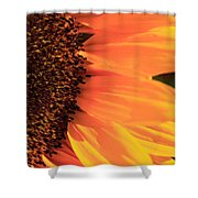Close Up Of The Florets And Petals Of A Sunflower Shower Curtain