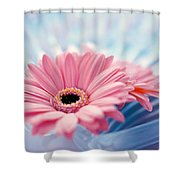 Close Up Of Two Pink Gerbera Daisies Shower Curtain