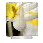 Close Up Of White Daisy Shower Curtain