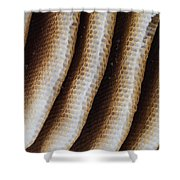 Close-up Of Wild Honey Bee Combs Shower Curtain