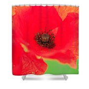 Close Up Poppies Shower Curtain