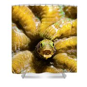 Close-up Spinyhead Blenny Shower Curtain
