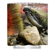 Close Up Underwater View Of Sockeye Red Shower Curtain