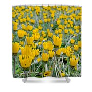 Closed Yellow Daisies Shower Curtain