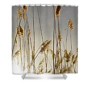 Closer To Home Shower Curtain