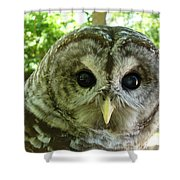 Closeup Of A Barred Owl Shower Curtain