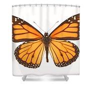 Closeup Of A Butterfly Shower Curtain