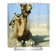 Closeup Of A Camel Shower Curtain