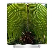 Closeup Of A Palm Tree Leaf Shower Curtain