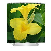 Closeup Of A Tropical Yellow Canna Lily Shower Curtain