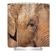 Closeup Of An Elephant Shower Curtain