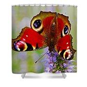 Closeup Of An European Peacock Butterfly  Shower Curtain