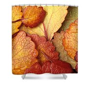 Closeup Of Dwarf Birch Leaves Autumn Ar Shower Curtain