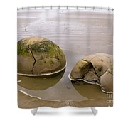Closeup Of Famous Spherical Moeraki Boulders In Nz Shower Curtain