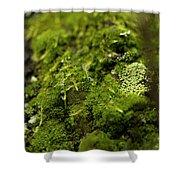 Closeup Of Moss And Lichen. Rhoen Shower Curtain