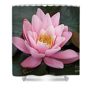 Closeup Of Pink Waterlily In A Pond Shower Curtain