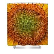Closeup Of Sunflower Shower Curtain