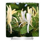 Closeup Shot Of Lonicera European Honeysuckle Flower Shower Curtain