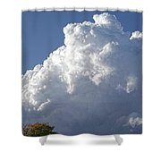 Cloud Study 120 Shower Curtain