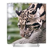 Clouded Leopard Cub Shower Curtain