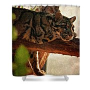 Clouded Leopard II Painted Version Shower Curtain